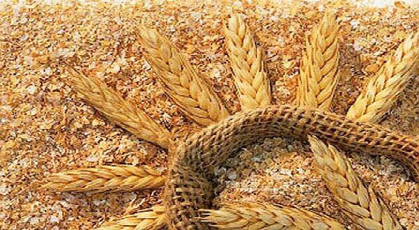 farelo de trigo engorda