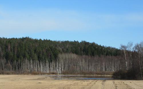 tulva niityllä Espoossa