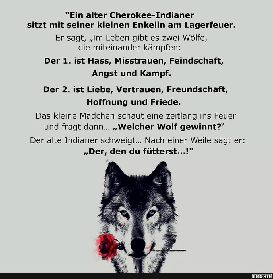 Wolf Sprüche Weisheiten Am Liebsten Sprüche In Bildern