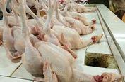 Jelang Natal dan Tahun Baru, Harga Ayam Potong Rp 34.000 Per Ekor
