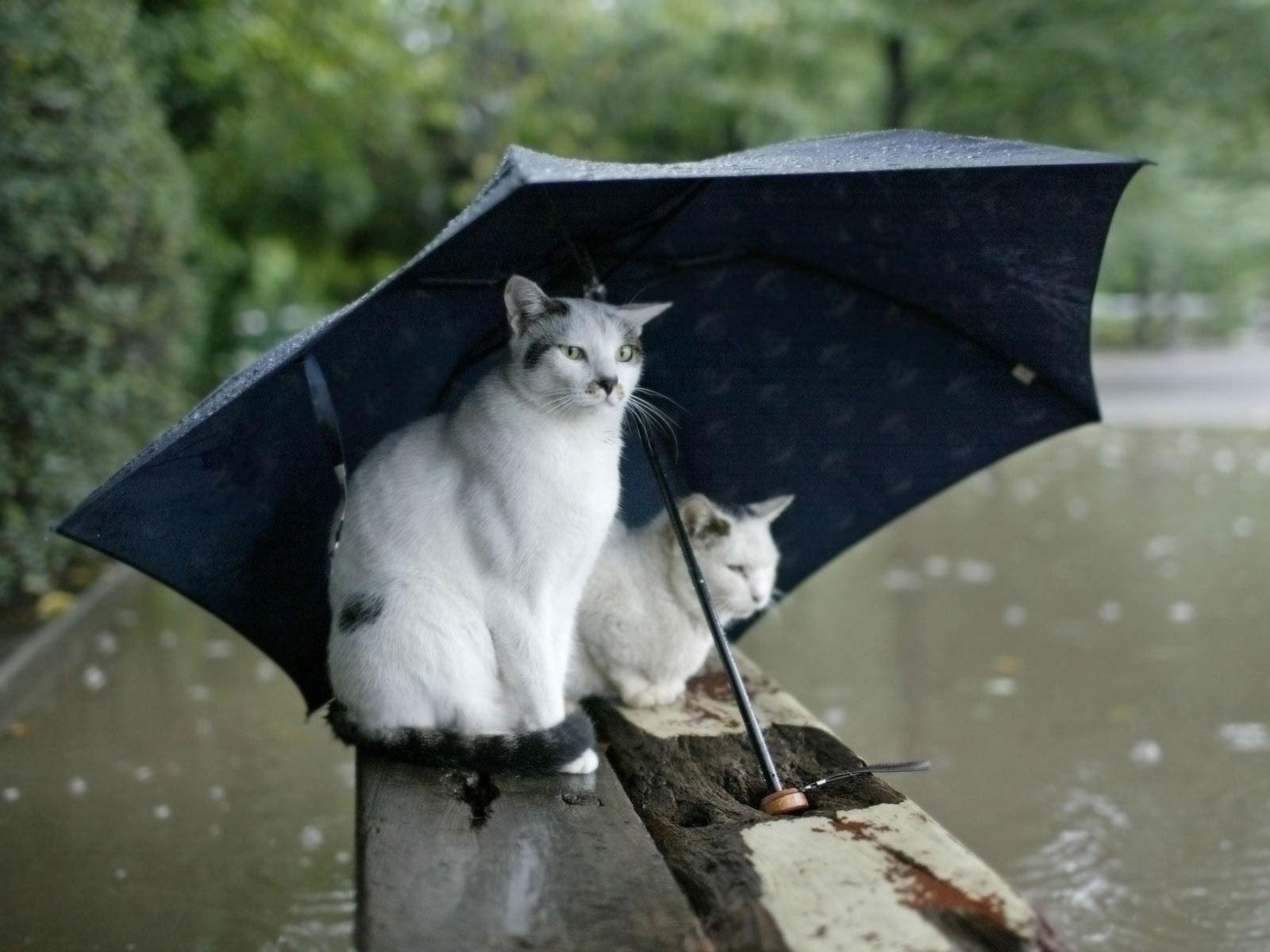 Rainy Sunday Mornin Jazz Playlist Wrir 973 Fm Richmond