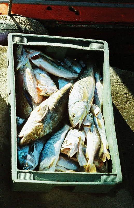 Box of fish, J-9
