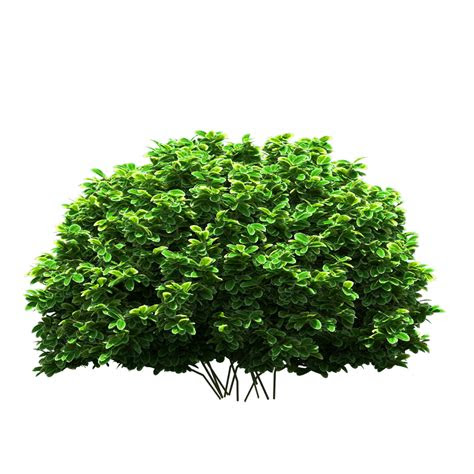 tree png  hd real tree png  photoshop picsart