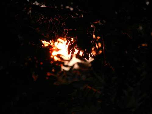 Sunset _ 4221