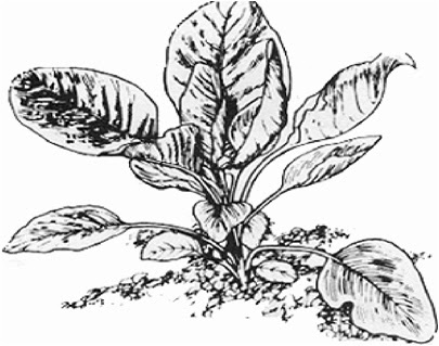 the ancient grains bakery blog  gluten