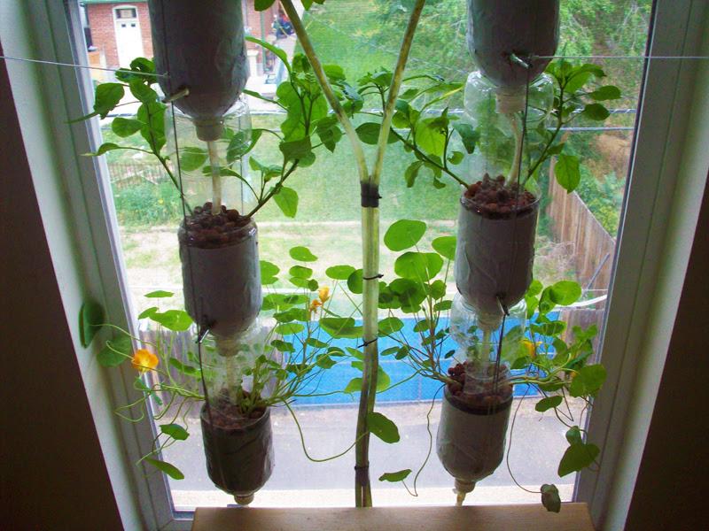 Windowfarms Hydroponic Indoor Garden