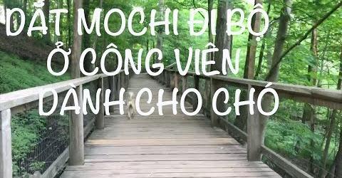Cuộc sống Toronto - Vlog, Dắt mẹ và bé Mochi đến công viên để đi bộ