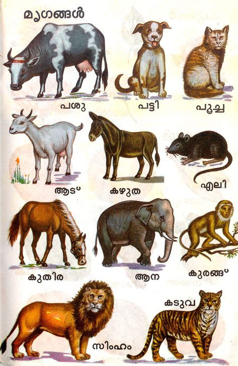 animal names malayalam zawelski flickr