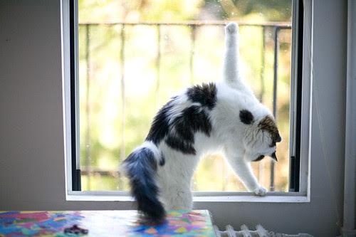 cat aerobics