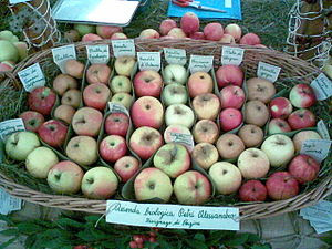 Variety of ancient apples from the Val di Non;...
