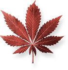 http://f.edgesuite.net/imagecache/gcui_inline_small/data/www.drugfreeworld.org/files/page01-image02-marijuana-leaves_el.jpg