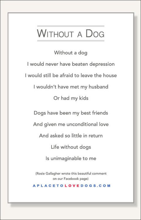 Quotes 3 198 All New Famous Quotes About Losing A Dog