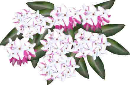 2月の花のイラスト スマイル1の部屋 楽天ブログ