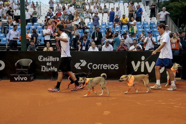 """Four Brazilian stray dogs were given a new lease on life when they were trained to be """"ball dogs"""" for the Brazil Open."""