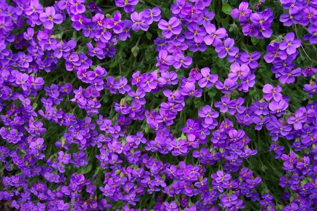 Purple Flowers Texture Flowers Flower Background Flower Texture