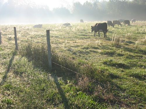 Pasture24Sep07-7252