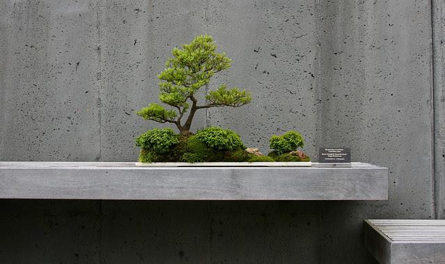 14_bonsai
