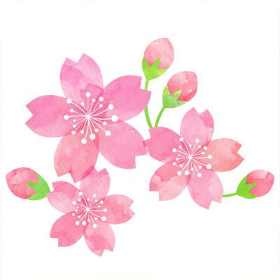 おしゃれなイラストが無料イラストカップillustcup 桜 水彩
