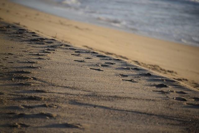 Μια Υπόθεση .... για τις Παραλίες