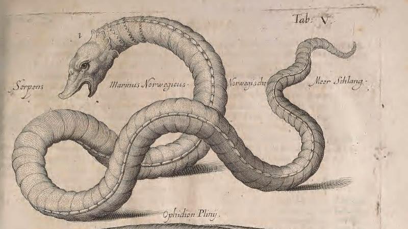 Serpent de Mer Norvégien