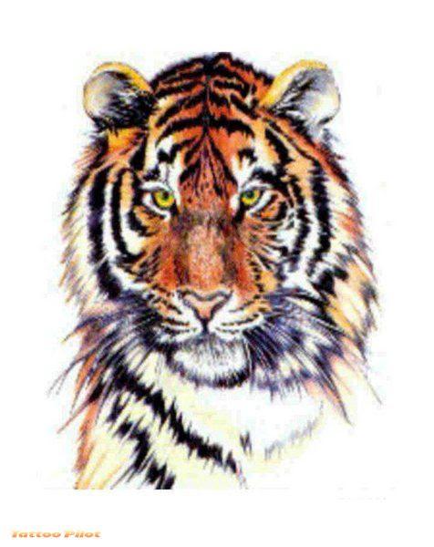 New Color Ink Tiger Head Tattoo Design