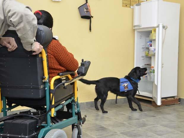 Cães adestrados foram doados a pessoas com deficiências físicas (Foto: Serviço Penitenciário Argentino/ BBC)