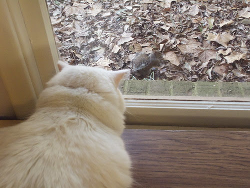 Nilla and the Squirrel 0022