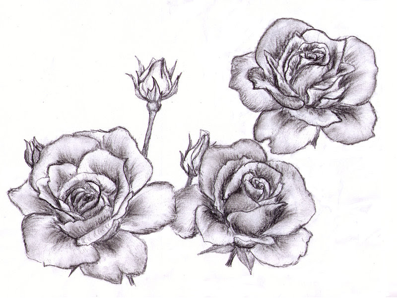 Free Roses Drawing Download Free Clip Art Free Clip Art On Clipart