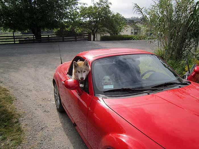 MX5 Dog Ride