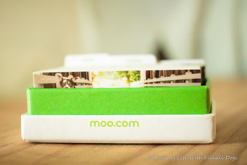 Moo Mini Cards-6634