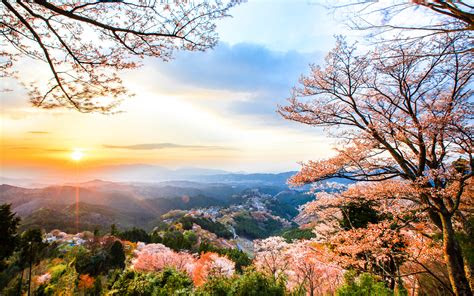 cherry blossoms images   wallpaperwiki