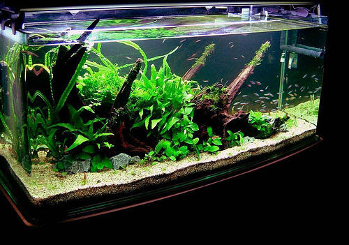 How to Buy a Good Fish Tank   Glass Fish Tanks