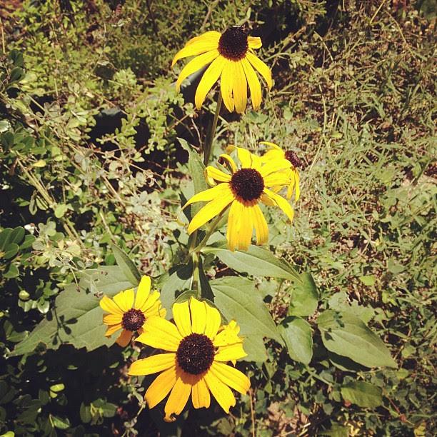 Flowers in Ohio