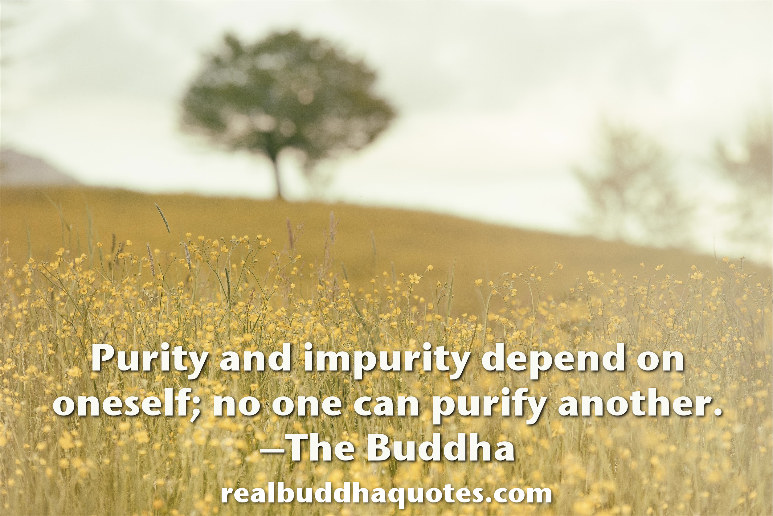 Purity And Impurity Depend On Oneself No One Can Purify Another