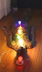 bulb man