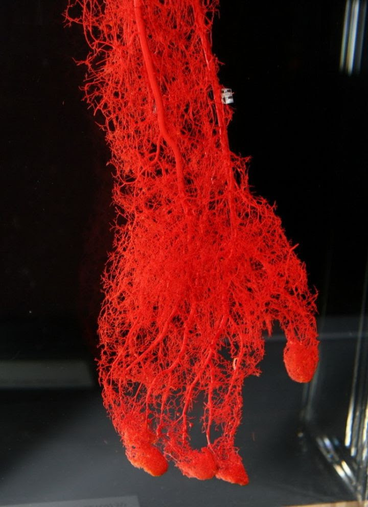 8. It looks like blood vessels in the hand of man in the world, people, photos