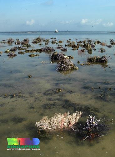 Beting Bronok: our last northern reef