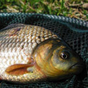 Календарь рыболова июль 2015, календарь рыбака июль, календарь клева рыбы июль, рыбалка в июле, лунный календарь рыболова на июль 2015, прогноз клева рыбы на июль, как ловить рыбу в июле, на что ловить рыбу в июле, какую рыбу ловить в июле, какая рыба клюет в июле