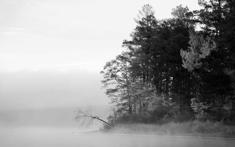 Campagne Dans Le Brouillard Noir Et Blanc Photo Fond Ecran Hd