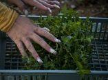 agroecologia-fernando-funes-cuba-8