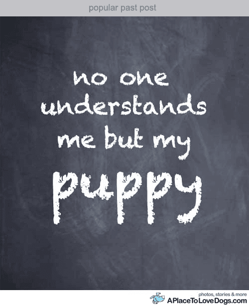 Quotes About Nobody Understand 65 Quotes