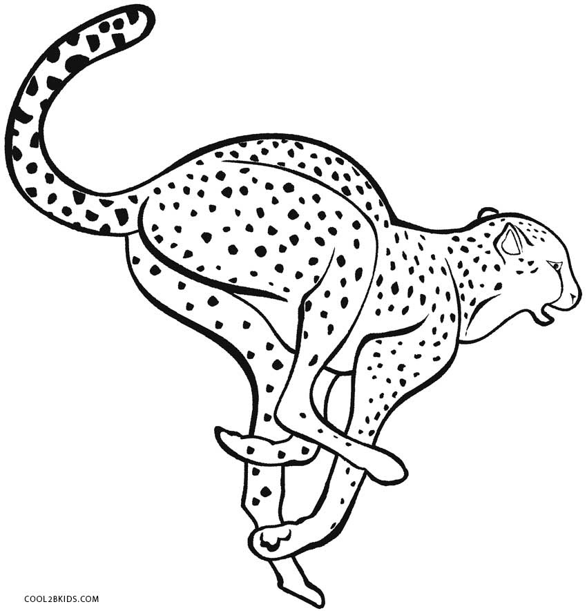 Leopard coloring pages Snow leopard coloring pages for kids and ... | 885x850