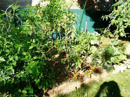 la_jungle_du_p_tit_jardin