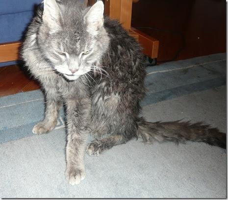 skopani maček