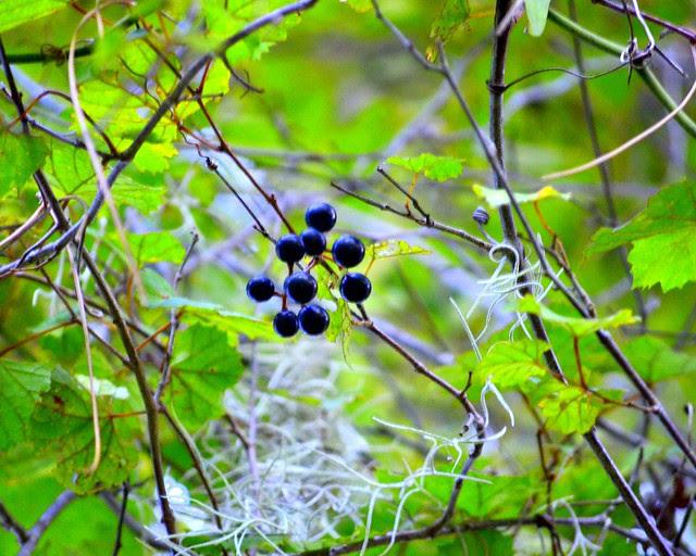 Bearing fruit...