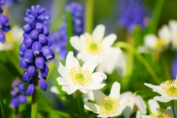 Frühlingsblumen Bilder Kostenlos Downloaden