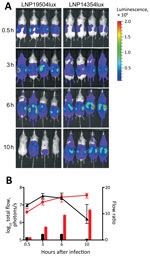 Thumbnail of Dynamic imaging showing the multiplication and spread of Neisseria meningitidis in BALB/c transgenic mice expressing the human transferrin. A) Dorsal views of 8 mice (4/group) analyzed for bioluminescence at intervals after infection, as shown on left. Mice were infected by intraperitoneal injection of 5 × 106 CFU of N. meningitidis strain LNP19504lux (derived from an isolate from France) or LNP14354lux (derived from an isolate from Africa). Both strains expressed the luciferase (lu