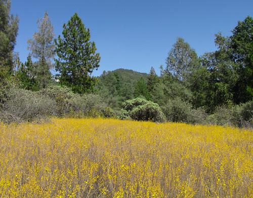 peak and yellowfields