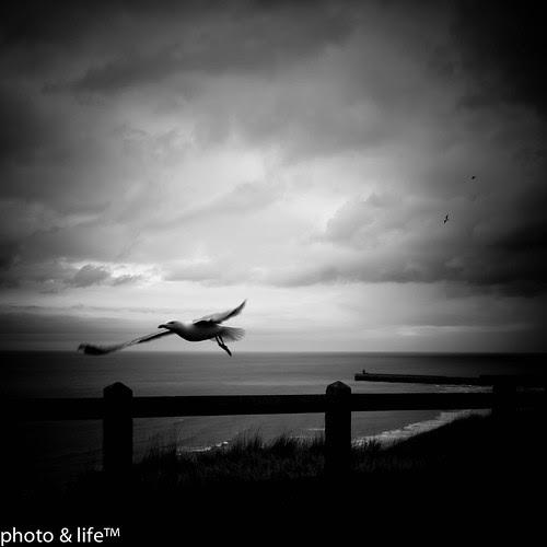 1187 by Jean-Fabien - photo & life™
