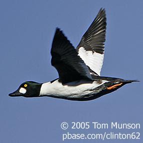 http://cts.vresp.com/c/?BirdNote/ee9f14121e/b0eaa8d8cc/c4d2df4f9a
